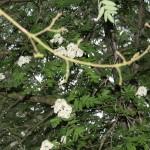 Easterskar (33)